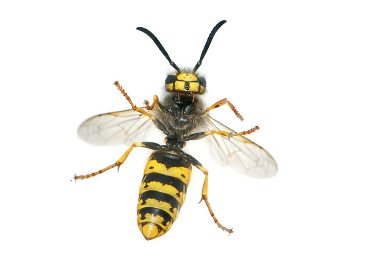 Wasp Control Moss Side 24/7, same day service, fixed price no extra!